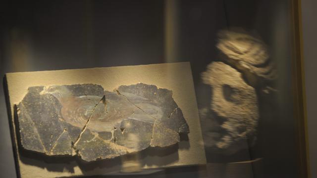 Jublains - Musée