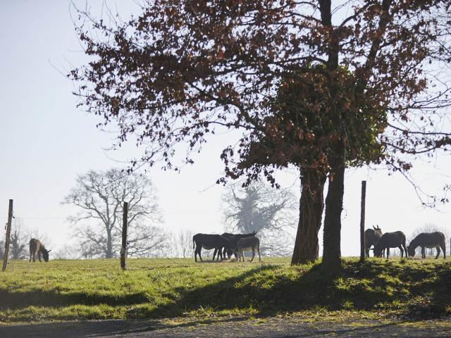 Asinerie Bois Gamat - paysage