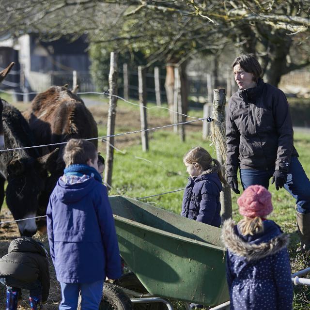 Asinerie Bois Gamat - nourir les abimaux