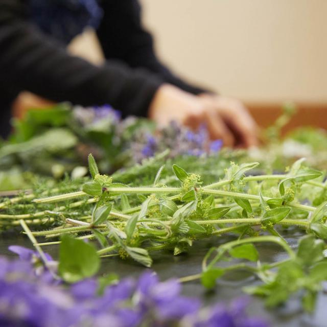 A la rencontre des plantes - Plantes sauvages comestibles
