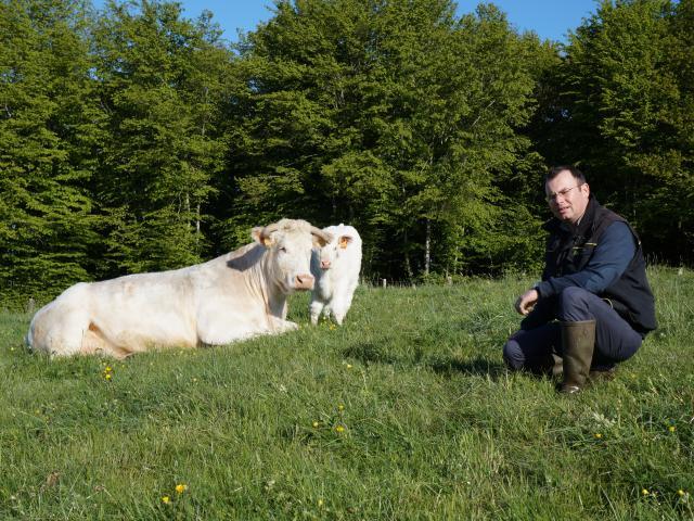 Boeuf fermier du Maine